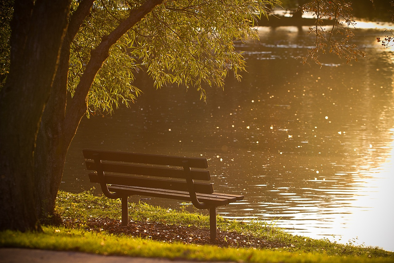 lakeside bench in cary park