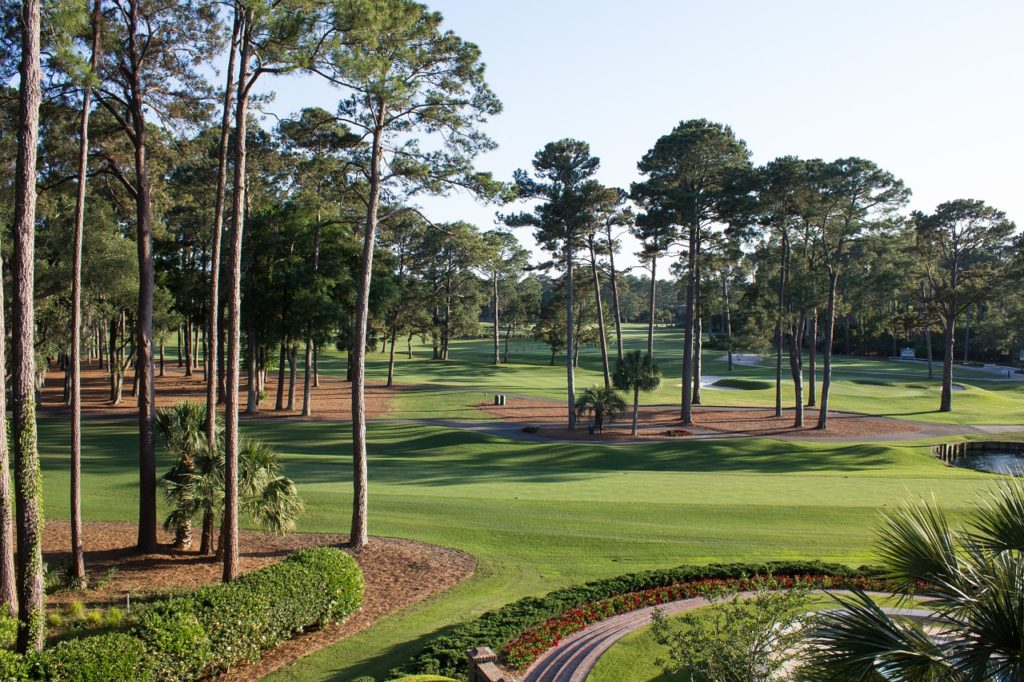 beautiful golf course with pines